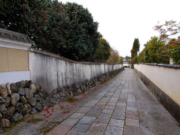 東福寺へと続く椿の道