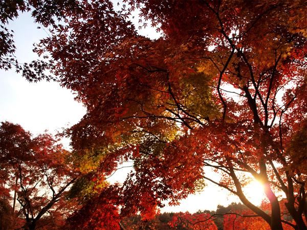竜安寺の夕日